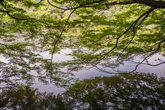 Reflections (davidemauro) Tags: tree albero riflesso pond reflexion stagno foglie
