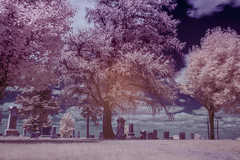Country cemetary (This, That and Everything) Tags: nikon d7100 infrared trees cemetary