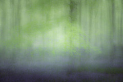 Green on Blue (gerainte1) Tags: bluebells woodland trees spring icm colour