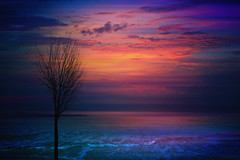 Magic place ... (Julie Greg) Tags: sky colours canon clouds sea tree nature nautre art abstract water
