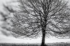 Shadows and Threats... (Ody on the mount) Tags: abstrakt anlässe bäume em5ii fototour hdr himmel landschaft mzuiko2518 omd olympus pflanzen schwäbischealb silhouette wolken abstract bw blackandwhite clouds landscape monochrome sw savingtheclimatebytrees schwarzweis sky trees metzingen badenwürttemberg deutschland