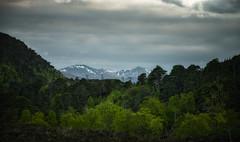 Vista in Glen Strathfarrar, Beauly, Scotland