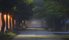 3378 (Keiichi T) Tags: 木 tree 6d 霧 road 道 street green fog night shadow eos 光 canon 日本 影 緑 japan 夜景 light 夜