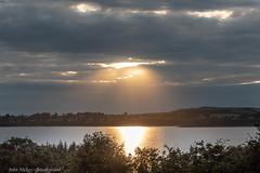 Sunset reflections DSC_0346 (John Hickey - fotosbyjohnh) Tags: naas 2019 july2019 trees light sunset sky lake clouds reflections landscape nikon flickr blessington blessingtonlakes nikond750