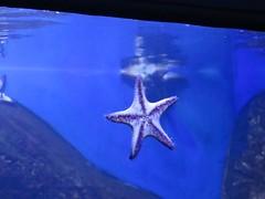 img_1459 (Ricardo Jurczyk Pinheiro) Tags: aquário zonaportuária passeio aquario tanque estreladomar riodejaneiro