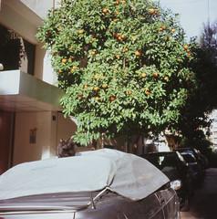 cat on the car under the orange tree (Vinzent M) Tags: brillant heliar 75 zniv voigtländer kodak portra athen athens greece αθήνα ελλάσ