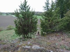IMG_20190511_194954edit (mtbboy1993) Tags: trail sti forest skog langesskanse langnes askim indreøstfold østfold norway norge opencamera rawtherapee