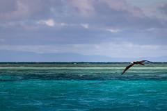 Mackay Cay, Great Barrier Reef