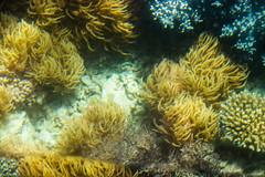Mackay Reef of the Great Barrier Reef