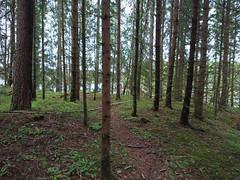 IMG_20190511_195406edit (mtbboy1993) Tags: skog forest askim indreøstfold østfold glomma langnes norge norway trail sti singletrack opencamera rawtherapee