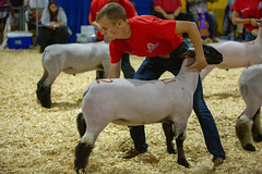 2019 DDA_Delaware State Fair-101 (agriculturede) Tags: delawarestatefair livestockextravaganza animals boy lamb livestock sheep showing teenager youth