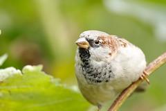 Την πέμπτη ημέρα, η ζωή διαφόρων και ποικίλων μορφών επιδεικνύει την εξουσία του Δημιουργού με διάφορους τρόπους (svalinebgt568) Tags: πουλί δέντρο πράσινο εκκλησίατουπαντοδύναμουθεού παντοδύναμοσθεόσ αστραπήτησανατολήσθεόσ αιώνιαζωή δευτέραπαρουσία ευαγγέλιο χριστιανισμόσ χριστόσ ιησούσ σωτήρασ ηαγάπητουθεού ηχιλιετήσβασιλεία πίστη ολόγοστουθεού βασιλείατωνουρανών πίστηστονθεό δόξατωθεώ κυριοσιησουσχριστοσ θελημαθεου πραγματικηαγαπη αγαπηθεου ηφωνητουκυριου ηπροσευχη