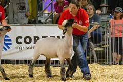 2019 DDA_Delaware State Fair-124 (agriculturede) Tags: delawarestatefair livestockextravaganza animals girl lamb livestock sheep showing teenager youth