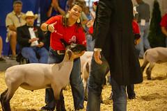 2019 DDA_Delaware State Fair-107 (agriculturede) Tags: delawarestatefair livestockextravaganza animals judge lamb livestock sheep showing winner youth