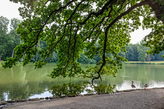 Leaning oak and ducks (timnutt) Tags: molly fun parent plants water germany munich birds city fujifilm reflection garden x100 plant munchen plantlife tree laughter toddler countrypark fuji bavaria park formalgarden x100t ducks trees