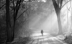 Ramblin Man (Emerald Imaging Photography) Tags: tilba narooma bermagui tilbahills newsouthwales nsw south sunbeams sunlight landscape trees forest woods photographer walking bush australia australian australianbush australianlandscape road walk
