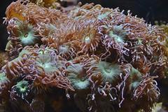 Aquarium, Royal Ontario Museum, Toronto, ON (Snuffy) Tags: royalontariomuseum rom toronto ontario canada aquarium