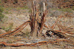 The Dead Tree (Alan1954) Tags: namibia tree nature africa holiday 2018