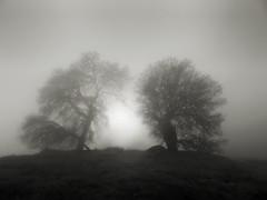 Fog Portal (StefanB) Tags: tree fog mood hiking treescape californa henrycoe 2019 em5 1235mm statepark light portal huntinghollow