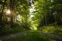 Morning - Sony RX0 II (Andreas Voegele) Tags: sony sonyrx0m2 sonyrx0ii rx0m2 rx0ii andreasvoegelephoto landscape forest wald morning