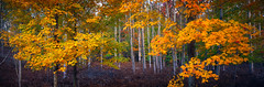Watchers Vale (JasonRobertJones) Tags: leelanau peninsula northern michigan october fall colors fuji velvia film pano
