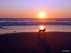 Entre chien et loup (Cathy Baillet) Tags: chien dog animal sea mer océan atlantique biscarrosse landes aquitaine beach plage