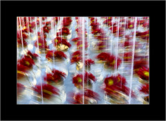 Floral Abstract 2 (SK Monos) Tags: icm creative abstract colours red floral flowers canon eos motion blur