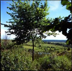 🌳 (petersoloway) Tags: yashicamat124g velvia fujivelvia velvia100 iso100 middleformat 120film 6x6 slide e6 tree landscape sky scan analog tlr