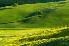 Greens (Johan Konz) Tags: late sunlight spring yellow green rolling hill valdorcia sanquiricodorcia tuscany italy landscape outdoor rural nikon d7500 tree field grass light shade shadow