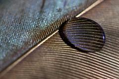 Waterproof (Hans Lambregts) Tags: lookingcloseonfriday feather