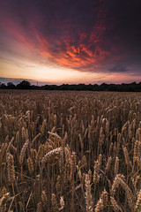Lower Beeding Sunset - Sussex (E_W_Photo) Tags: sunset lowerbeeding horsham sussex england uk wheat field pink sky canon 80d sigma 1020mm leefilters