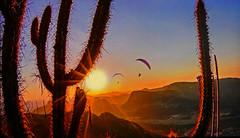 Two paragliding at sunset (Jacques Rollet (Little Available)) Tags: sunset couchant parapente parapentiste paragliding paraglider vegetation sun soleil ciel sky montagne mountain cactus groupenuagesetciel