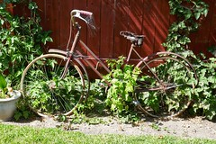 1941 New World Schwinn (Dolores.G) Tags: 365the2019edition 3652019 day206365 25jul19