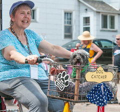 """""""Dog Catcher"""" (scattered1) Tags: july4th bicycle mi marquette smalldog upperpeninsula parade doglover michigan summer humorous northernmichigan woman dog independenceday dogcatcher 2019 thereisnosuchthingasanuglydog northern"""