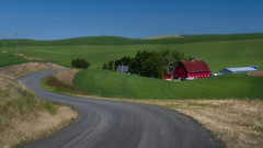 Country Road, Take Me Home (Steven Olmstead) Tags: gravelroad nopeople tranquilscene ruralscene redbarn farmstead farmland palouse windingroad wheat fields