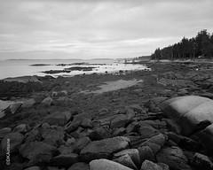 Spruce Head (http://www.aimonephoto.com) Tags: 4x5 blackwhite kodaktrix320 largeformat pyrocatmc travelwide904x5filmcamera film monochrome safe travelwide904x5 camera