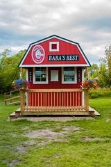 Baba's Best (Bracus Triticum) Tags: babas best 7月 七月 文月 shichigatsu fumizuki bookmonth 2019 reiwa summer july アルバータ州 alberta canada カナダ