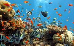 Khám phá vương quốc san hô ở Côn Đảo (quynhchi19102016) Tags: ve may bay gia re di con dao