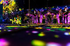 Leading Light (Jared Beaney) Tags: canon canon6d photography photographer travel asia japan tokyo museum light teamlab borderless moridigitalart building dark indoor display digitalart mori art digital