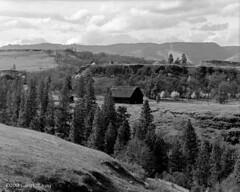 Cliff Barn near Rowena Crest (Gary L. Quay) Tags: barn rowena mosier columbiagorge oregon wascocounty pacificnorthwest film filmphotography largeformat 4x5 kodak garyquay sinar sinaralpina trees spring