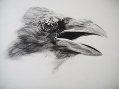 VIGILANCE (Sketchbook0918) Tags: raven bird avian wildlife sktch drawing paper charcoal graphite eye beak feather sketch animal nature portrait illustration