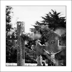 Nous sommes tous des pèlerins /  We are all pilgrims (Napafloma-Photographe) Tags: 2019 architecturebatimentsmonuments bandw bw bretagne détailsarchitecturaux edificesreligieux fr france géographie morbihan métiersetpersonnages natureetpaysages personnes techniquephoto végétaux arbre blackandwhite church cimetière coquelicot croix monochrome napaflomaphotographe noiretblanc noiretblancfrance photographe province église saintgildasderhuys