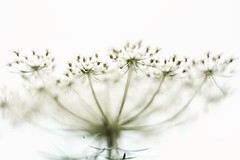 Flower (agnieszka.a.morawska) Tags: oldlens helios helios44m bkhq beyondbokeh bokehlicious bokeh flower