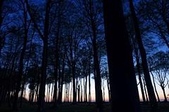 (Px4u by Team Cu29) Tags: ostsee nienhagen gespensterwald blauestunde abenddämmerung