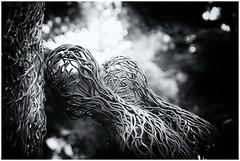 "Ochirbold Ayurzana - ""Degree"" (RadarO´Reilly) Tags: nordart 2019 kunstwerkcarlshütte carlshütte büdelsdorf kunst art sw bw schwarzweis blackwhite blanconegro monochrome noiretblanc zwartwit ilfordhp5plus400 explore inexplore"