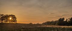 Summer evening walk (2) (Peter Leigh50) Tags: wistow sunshine sun trees landscape landschaft leicestershire skyscape sky fujifilm fuji field farmland xt2