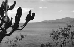 Cactus/Sea/Volcanoes (•Nicolas•) Tags: 125iso bw camera canaryislands collection espagne fp4 holidays ilford ilfosol lanzarote leicaiiif nb nicolasthomas spain vacances vintage