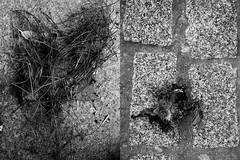 43 Manuel de la Cruz (espaciosparaelarte) Tags: arte artecontemporáneo bellasartes blancoynegro cultura comunidaddemadrid creación exposición exposiciones espaciosparaelarte calle universos vuelo paloma hoja agua gota mano sombra ojo papel detalle contraste díptico davidjiménez cielo