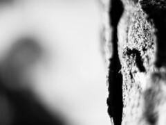 29 Enrique Orce 2 (espaciosparaelarte) Tags: arte artecontemporáneo bellasartes blancoynegro cultura comunidaddemadrid creación exposición exposiciones espaciosparaelarte calle universos vuelo paloma hoja agua gota mano sombra ojo papel detalle contraste díptico davidjiménez cielo