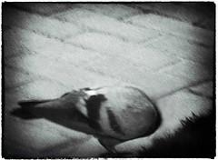 26 Enrique Mezquita (espaciosparaelarte) Tags: arte artecontemporáneo bellasartes blancoynegro cultura comunidaddemadrid creación exposición exposiciones espaciosparaelarte calle universos vuelo paloma hoja agua gota mano sombra ojo papel detalle contraste díptico davidjiménez cielo